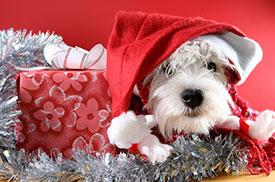 Have a Joyful Season with Credit Union Holiday Loans